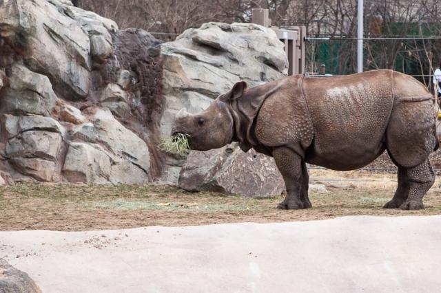 Zoo-13