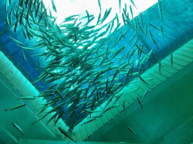 03-aquarium1