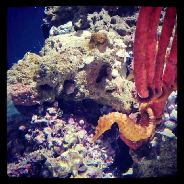 07-aquarium2i