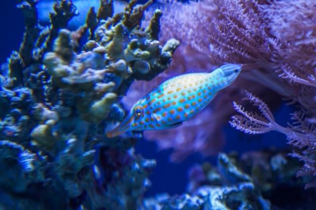14-aquarium-2