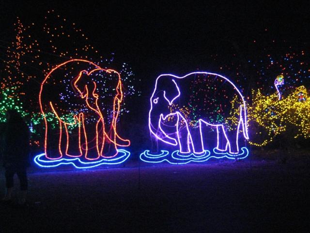 zoo-6