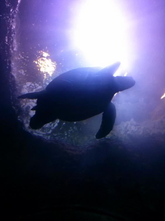 2-aquarium3