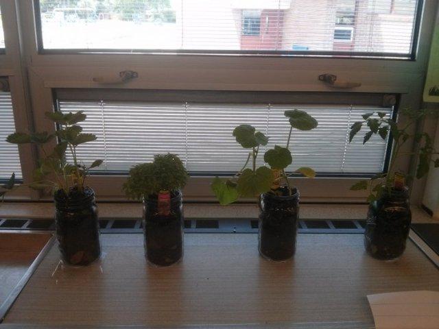 classroomplants